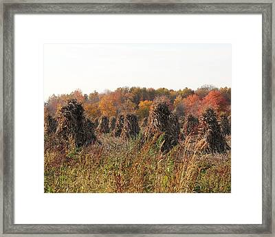 Autumn Corn Framed Print by Donna Bosela
