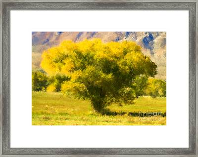 Autumn Cottonwood Framed Print