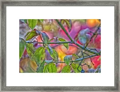 Autumn Crayolas Framed Print by Ross Powell