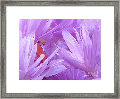 Framed Print featuring the photograph Autumn Crocus by Michele Penner