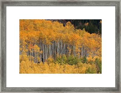 Framed Print featuring the photograph Autumn Curtain by Jim Garrison