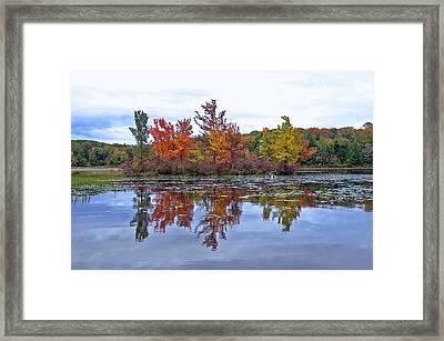 Autumn Diversity Framed Print by David Rucker