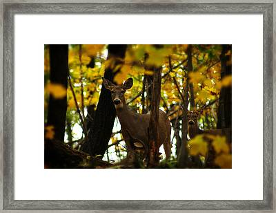Autumn Doe Framed Print by Scott Hovind