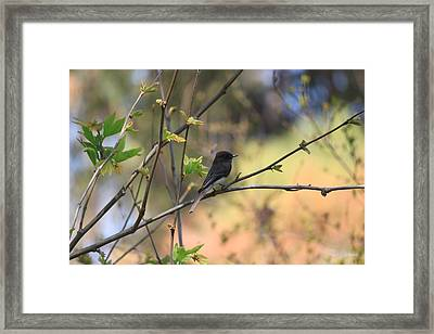 Framed Print featuring the photograph Autumn Eyes by Amy Gallagher