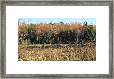 Autumn Field And Pine Framed Print by Loretta Pokorny