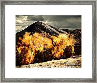 Autumn Fire Framed Print by Arne Hansen
