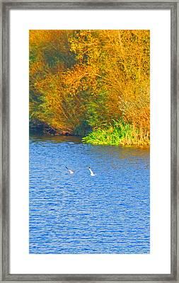 Autumn Flight Framed Print by Bai Qing Lyon
