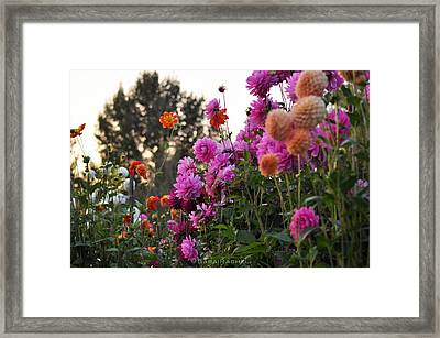 Autumn Flowers Framed Print by Sarai Rachel