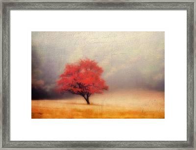 Autumn Fog Framed Print by Darren Fisher