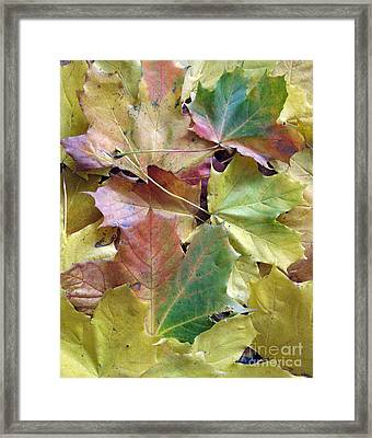 Autumn Foliage Framed Print by Ausra Huntington nee Paulauskaite