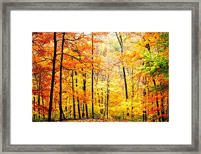 Framed Print featuring the photograph Autumn Forest by Randall Branham