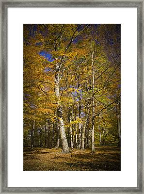 Autumn Forest Scene In West Michigan No.1147 Framed Print by Randall Nyhof