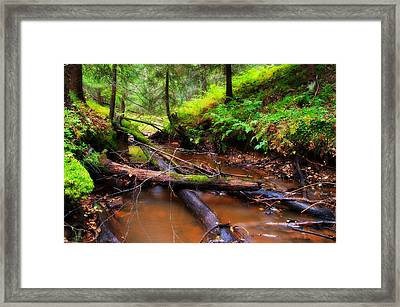 Autumn Forest Framed Print by Tommi Saarela