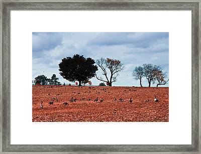 Autumn Geese Framed Print by Bill Cannon