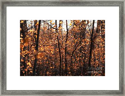 Autumn Glory Framed Print by Chris Hill