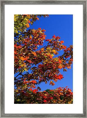 Autumn Glory Framed Print by Christopher McPhail