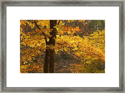 Autumn Glow Framed Print