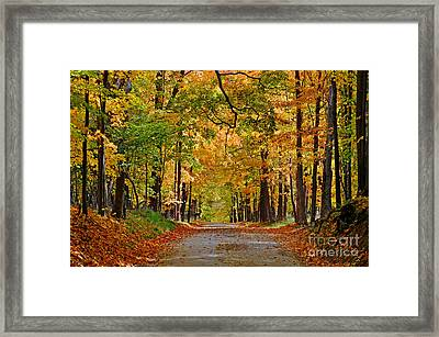 Autumn Gold Framed Print by Rodney Campbell