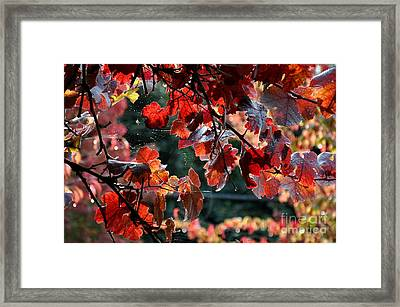 Autumn Grapes And Spider Webs Framed Print