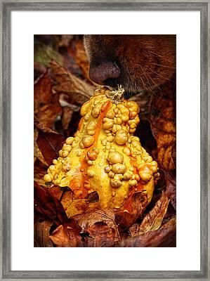 Autumn Harvest Camouflage Framed Print