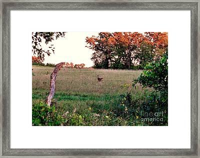 Autumn Hunt Framed Print by Marilyn Smith
