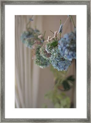 Autumn Hydrangea Framed Print