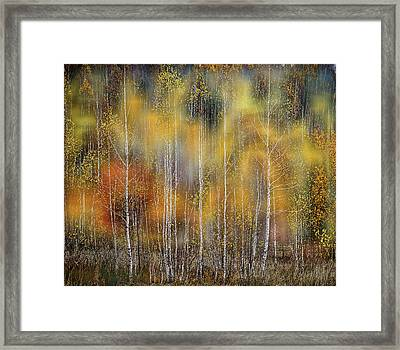Autumn Impression Framed Print