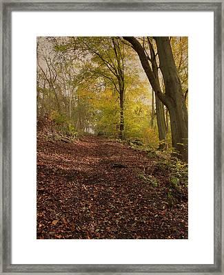 Autumn In Brantingham Woods Framed Print