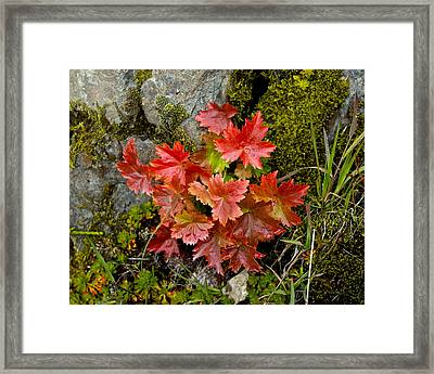 Framed Print featuring the photograph Autumn In Canada by Sylvia Hart
