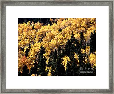 Autumn In Colorado Painting Framed Print