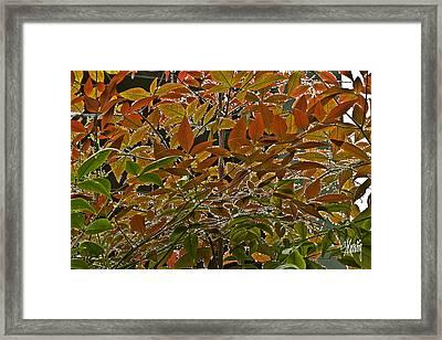Autumn In Muttart Framed Print