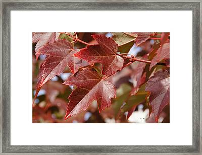 Framed Print featuring the photograph Autumn In My Back Yard by Mick Anderson