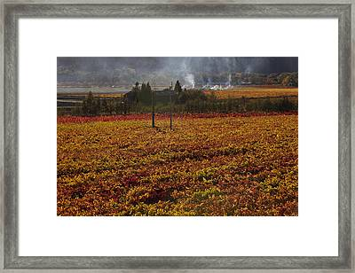 Autumn In Napa Valley Framed Print