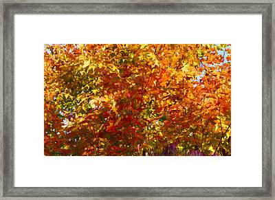 Autumn In October Framed Print by Anthony Rego