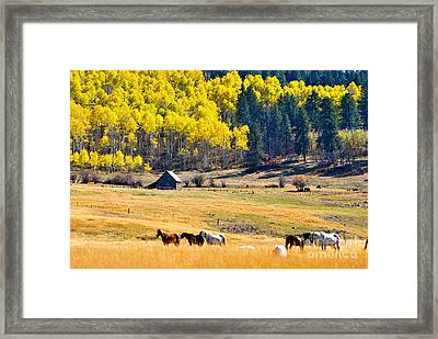 Autumn In Pagosa Framed Print