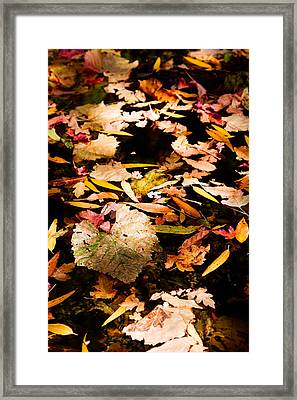 Autumn In Texas Framed Print