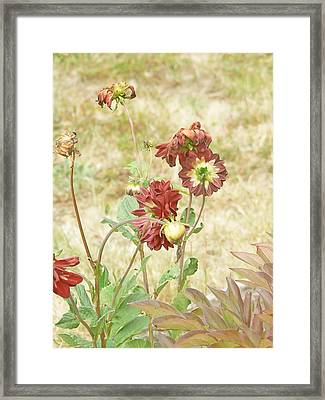 Autumn In The Garden  Framed Print by Pamela Patch