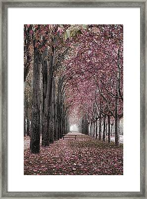 Autumn In The Grove Framed Print