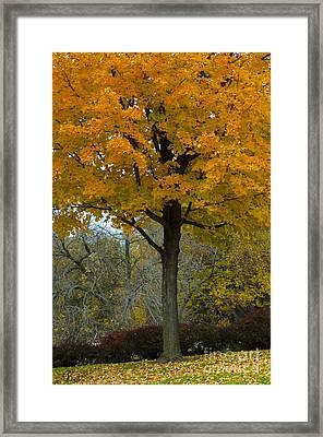 Autumn In Wildwood Park Framed Print