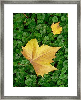 Autumn Just Began Framed Print by Philippe Taka