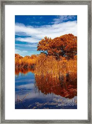 Autumn Landscape Framed Print by Gabriela Insuratelu