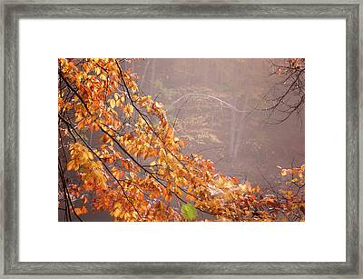 Framed Print featuring the photograph Autumn Leaves And Fog by Tom Singleton