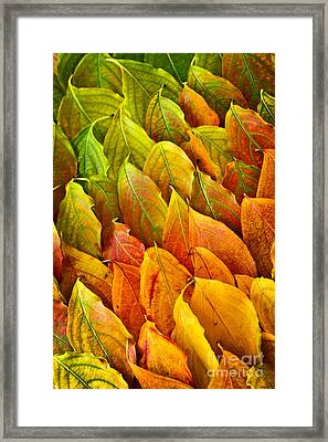 Autumn Leaves Arrangement Framed Print
