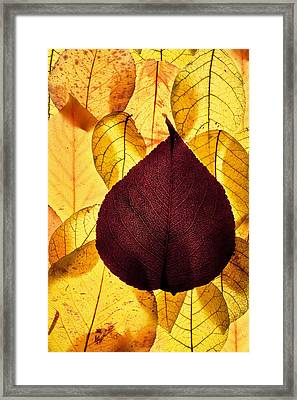 Autumn Leaves Framed Print by Bob Decker