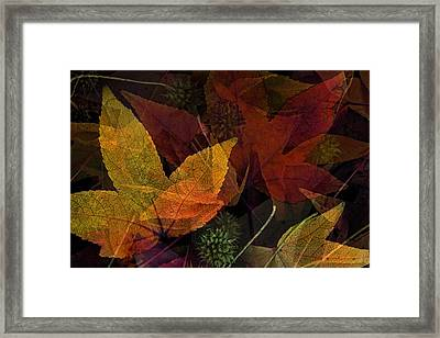 Autumn Leaves Collage Framed Print by Bonnie Bruno