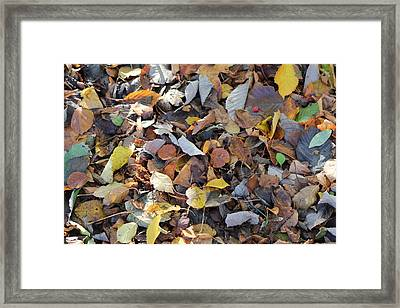 Framed Print featuring the photograph Autumn Leaves by David Grant