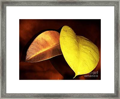 Autumn Leaves Framed Print by Ellen Cotton
