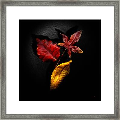 Autumn Leaves Framed Print by Gerlinde Keating - Galleria GK Keating Associates Inc