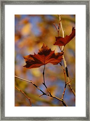 Autumn Leaves II Framed Print by Dickon Thompson