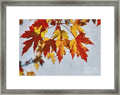 Autumn Leaves IIi Framed Print by Billie-Jo Miller